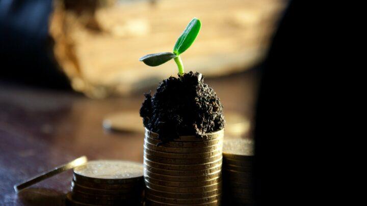 Zu sehen sind unterschiedlich große Stappel aus Geldmünzen. Aus dem größten Stappel wächst eine kleine Pflanze.